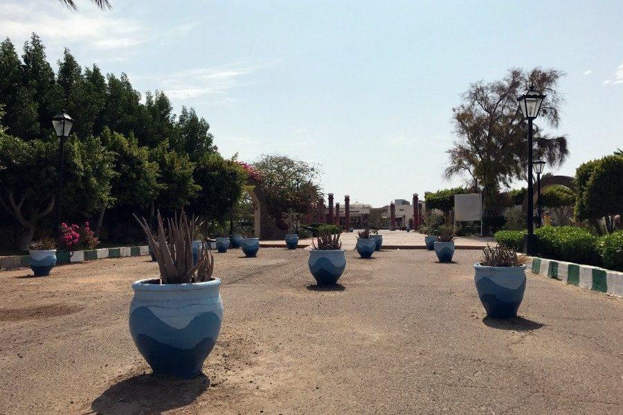 magawish-village-resort-vertrocknete-pflanzen